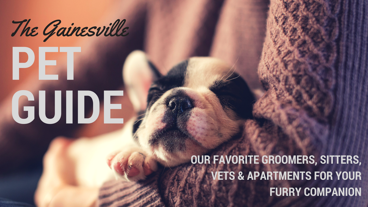 A Pet Owners Guide To Gainesville Apartments In Gainesville Fl
