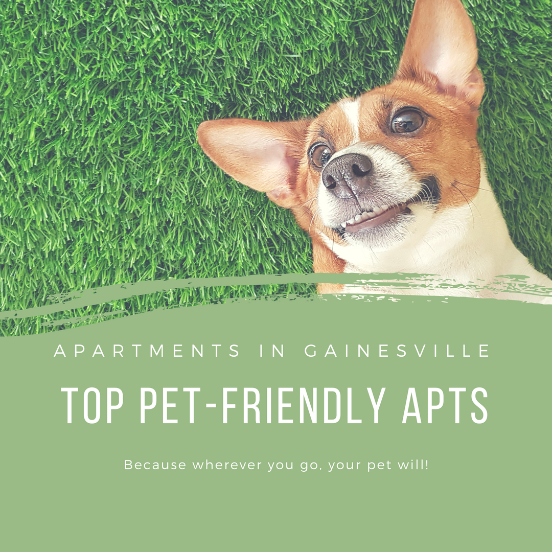 Top Pet-Friendly Apartments In Gainesville!